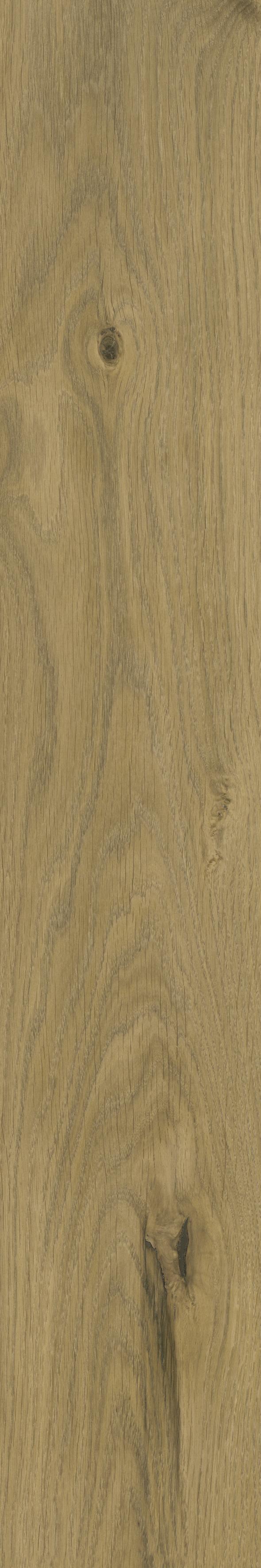 法国橡木 French oak