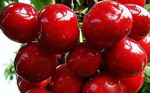 拉宾斯大樱桃