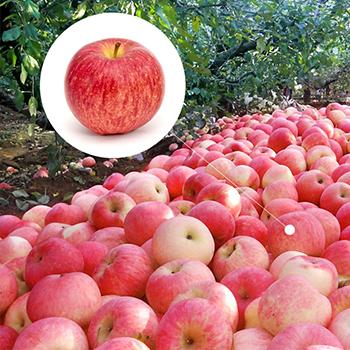 納米富硒蘋果